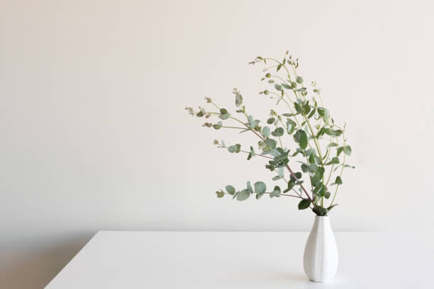 Eucalyptus leaves in vase on table stock photo