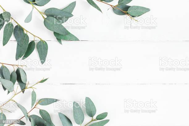 Eucalyptus leaves on white background flat lay top view picture id917171252?b=1&k=6&m=917171252&s=612x612&h=swtglwpg ovod8ivjieolekk8m3vo jqhkmkuikwvsq=
