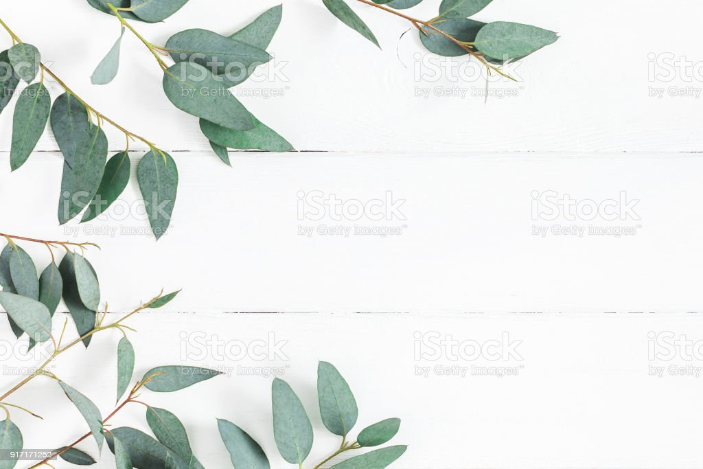 Eucalyptus leaves on white background. Flat lay, top view stock photo