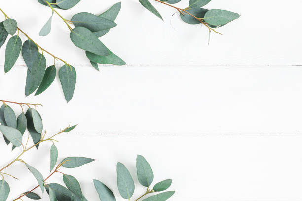 eucalyptus leaves on white background. flat lay, top view - leaf imagens e fotografias de stock