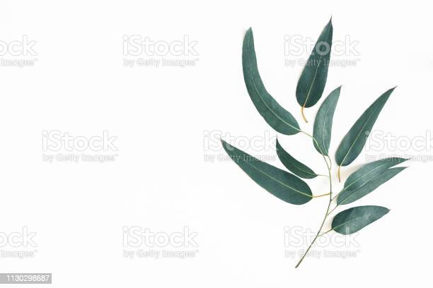 Eucalyptus leaves on white background pattern made of eucalyptus picture id1130298687?b=1&k=6&m=1130298687&s=612x612&h=qiqz8alpjn fejs5se5zsv6th1dbwqrxyl 77bhcqws=