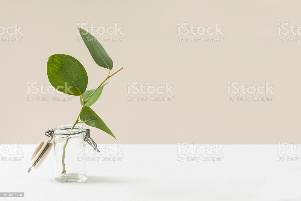 Eucalyptus Still Life stock photo