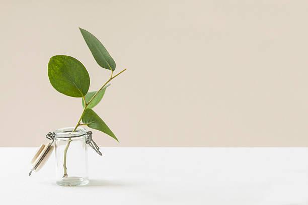 eucalyptus still life - vase glas stock-fotos und bilder