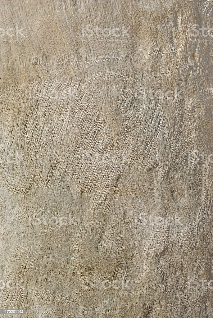Eucalyptus tree trunk texture stock photo