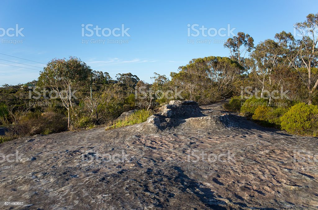 Eucalyptus Trees With Large Rock In Foreground Lizenzfreies stock-foto