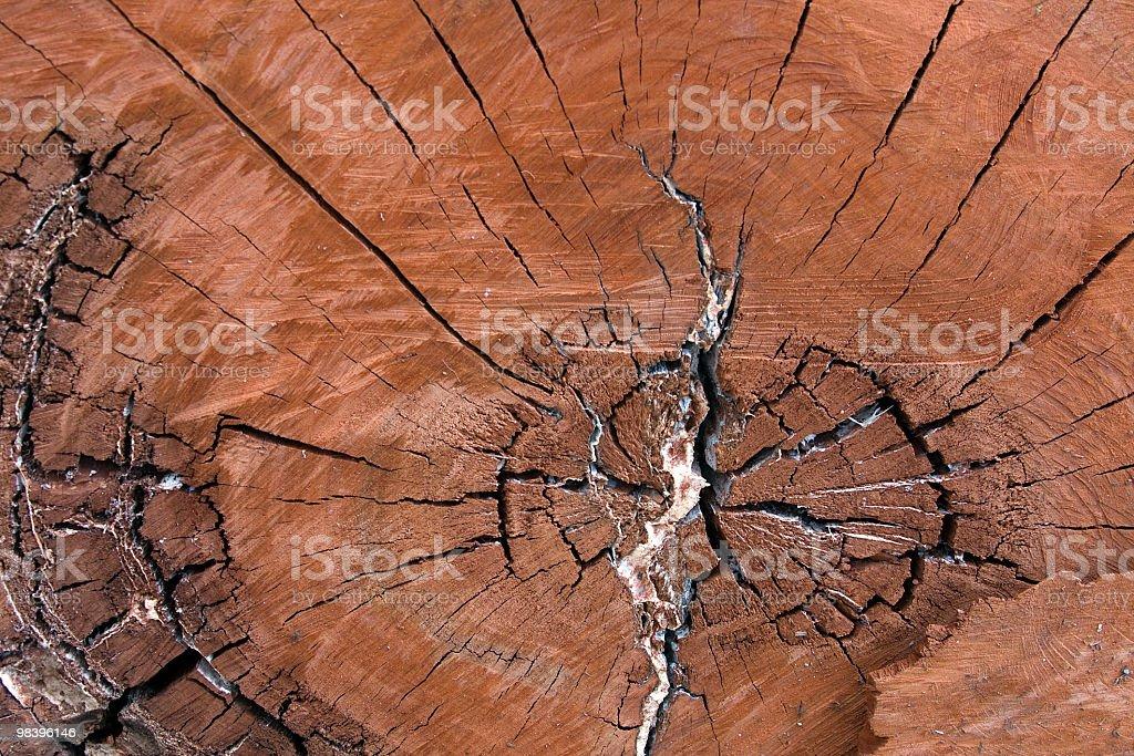 유칼립투스 나무 royalty-free 스톡 사진