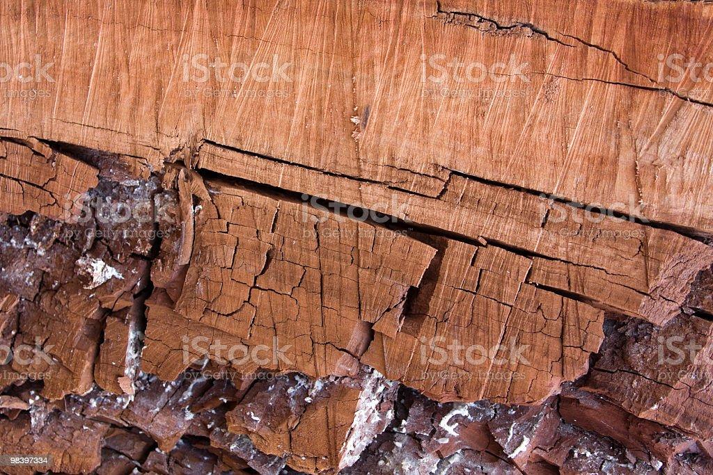 Eucalyptus wood royalty-free stock photo