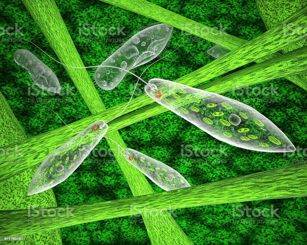 Fotografía de Euglena Green And Ciliate In The Natural Environment y ...