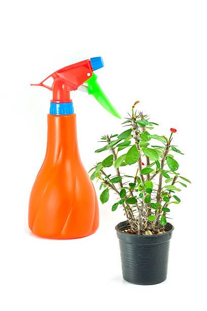 Euphorbia e atomizer - foto de acervo