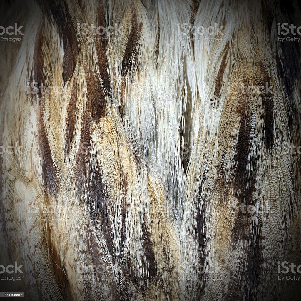 eurasian eagle owl  plumage stock photo