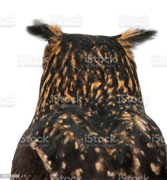Eurasian eagleowl bubo bubo 15 years old against white background picture id823752034?b=1&k=6&m=823752034&s=612x612&h=0rlqay0rp7so2f43n2s624tfue6v7ksg srhjgdoxeo=