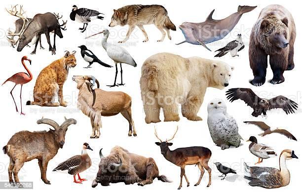 Europe animals isolated picture id546192268?b=1&k=6&m=546192268&s=612x612&h=y9cjgwzgc0hn53ip m8t l4hnxbkcwfxwpt5 evhzti=