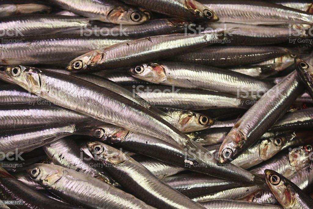 European anchovies (Engraulis encrasicolus) royalty-free stock photo