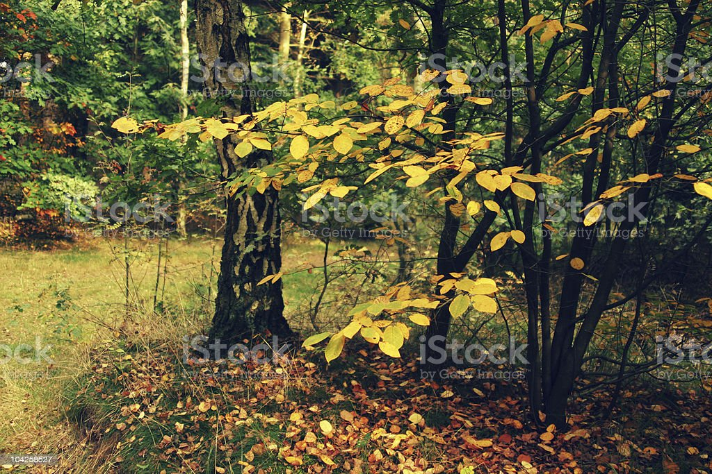 European Autumn forest royalty-free stock photo