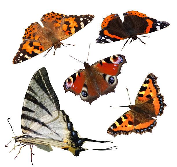 European butterflies picture id154446075?b=1&k=6&m=154446075&s=612x612&w=0&h=ntvtezupgak5ipzadgf1bflyg7m gkao3g4mdpuhaia=