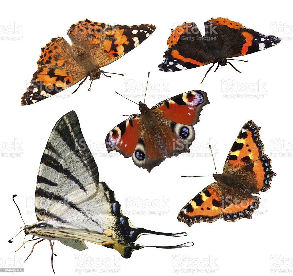 European Butterflies stock photo