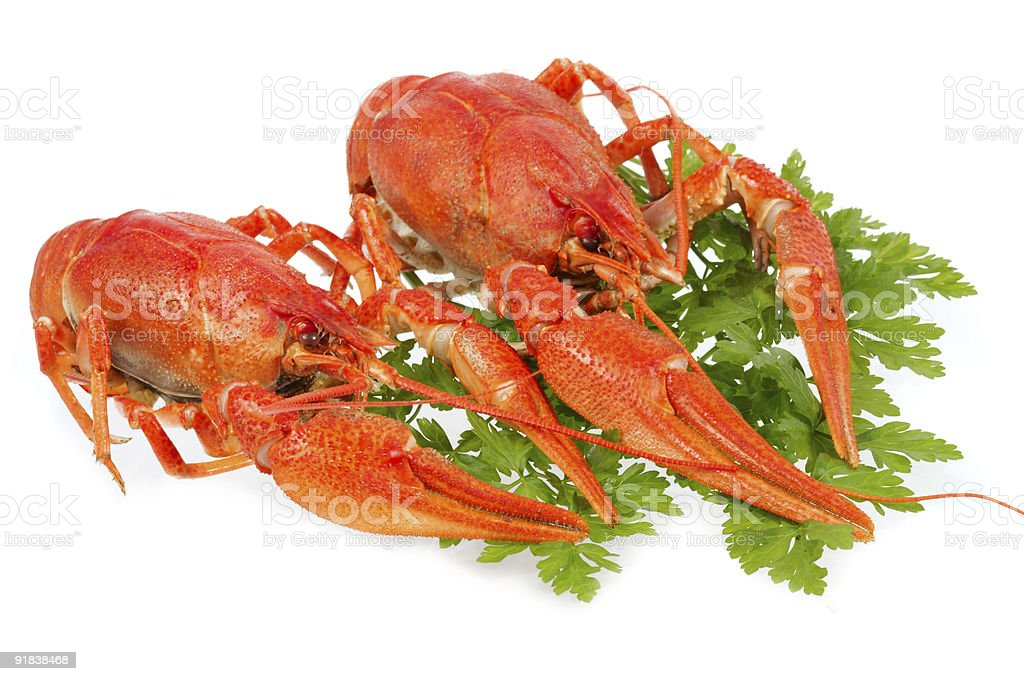 European crayfish royalty-free stock photo
