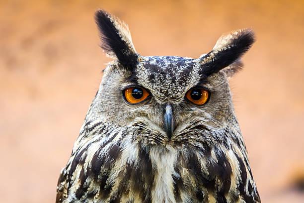 European eagle owl picture id473532818?b=1&k=6&m=473532818&s=612x612&w=0&h=67xpyxxywjqi ty0gojg2x2bex1s90ezf ykdrz3ih4=