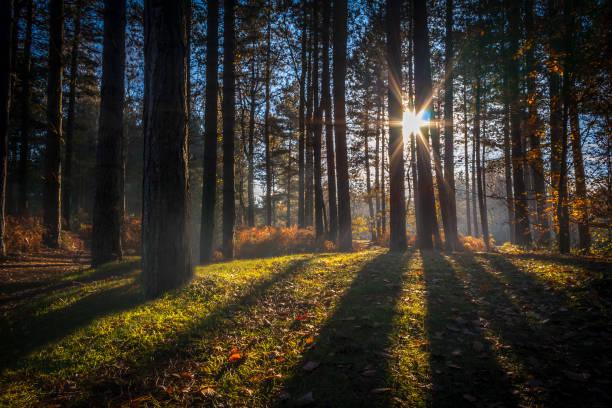 European Forest in Autumn stock photo
