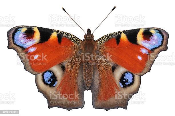 European peacock butterfly picture id489086312?b=1&k=6&m=489086312&s=612x612&h=ze6cl llrlfszhq9nlv7hcuialtkqsxzc62lp1et1qu=