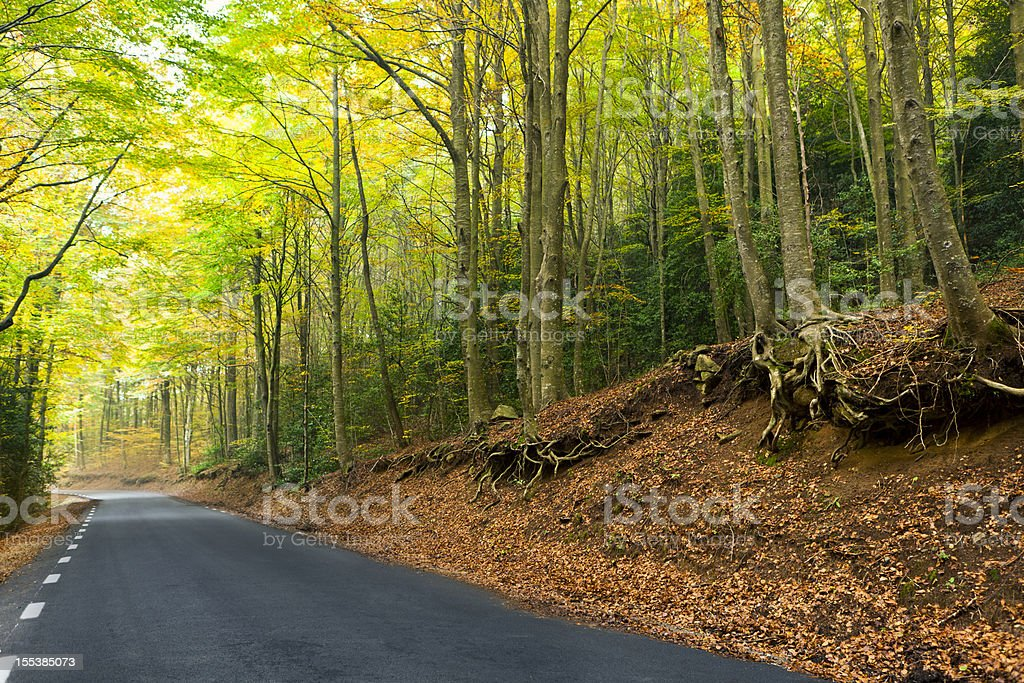 European road in a beautiful forest stock photo