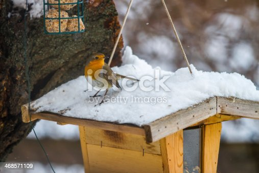 istock European Robin at the feeding place in winter 468571109
