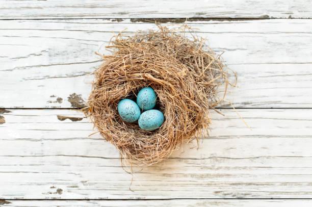 europäische robin eier in einem echten nest - schöne osterbilder stock-fotos und bilder