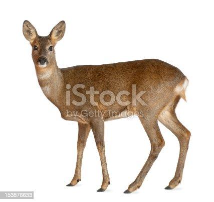 istock European Roe Deer standing against white background 153876633