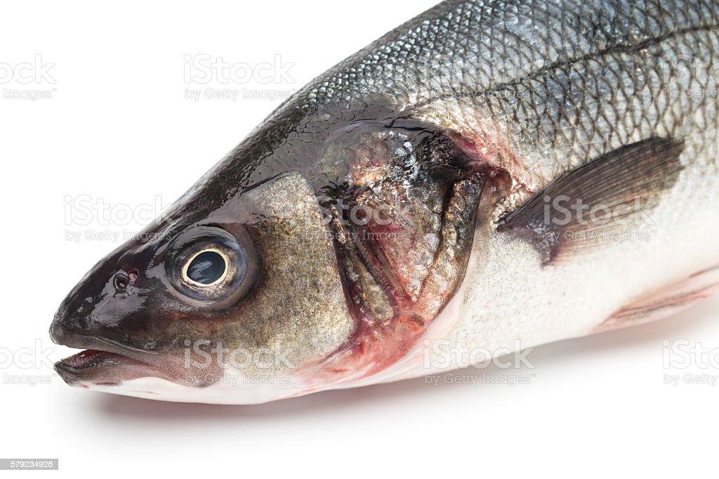 European seabass, branzino fish stock photo