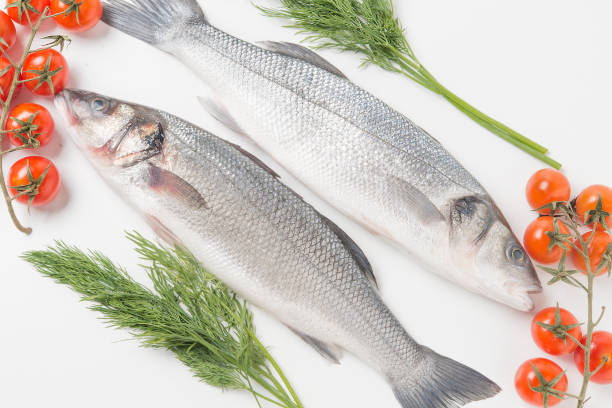 European seabass, branzino fish stock photo