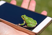 European Tree Frog resting on smart phone - funny photo, blur background, Green Tree Frog Isola della Cona, Monfalcone, Italy, amphibian, frog, full frame, copy space