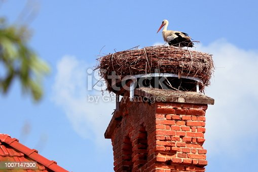 European white stork (Ciconia ciconia) stands on his big nest. The stork nest is made of a lot of branches and lies on a nice old brick chimney. The nest was prepared by human - inside is a construct.