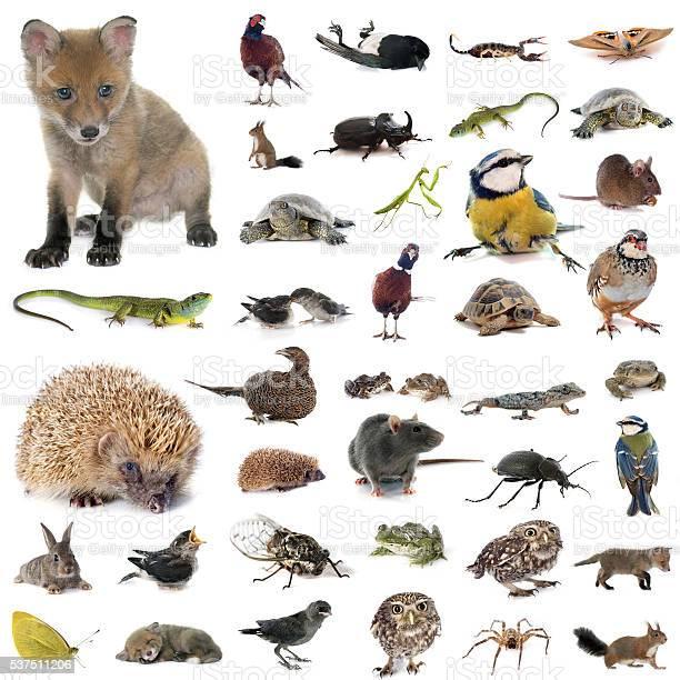 European wildlife in studio picture id537511206?b=1&k=6&m=537511206&s=612x612&h=lsyiowssae4h2q eiknoss32lsjzt9nvpgpcsgsn06a=