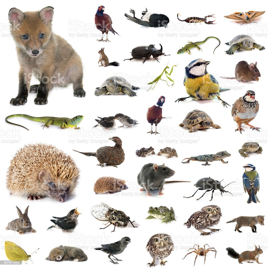 european wildlife in studio stock photo