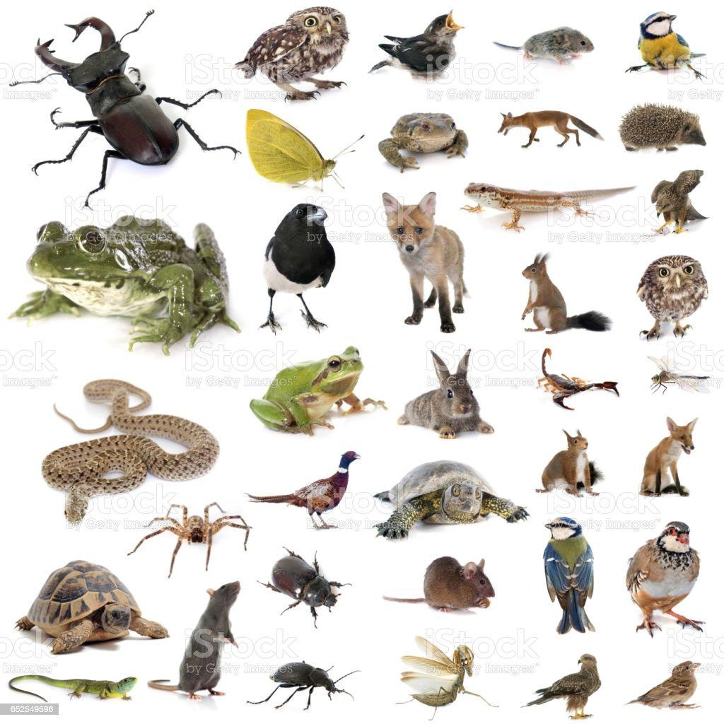european wildlife stock photo