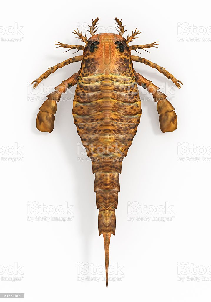 Eurypterus remipes (Sea Scorpion) stock photo