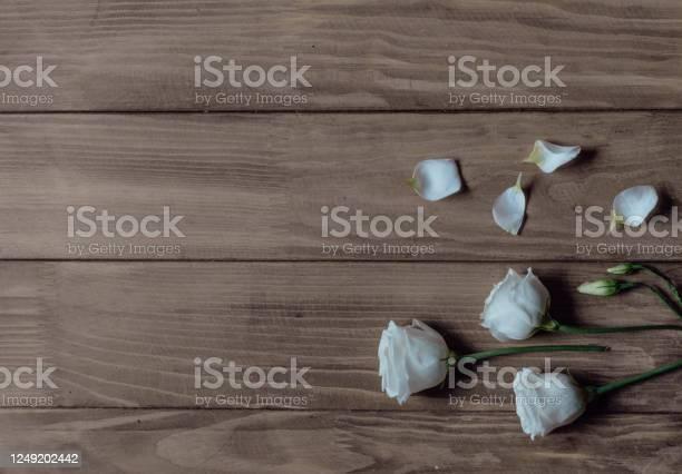 Eustoma flowers with fallen petals on a wooden background picture id1249202442?b=1&k=6&m=1249202442&s=612x612&h=ovzbqpa9zmw60j yzucdjdltcercul98ldpjb9bz1bu=