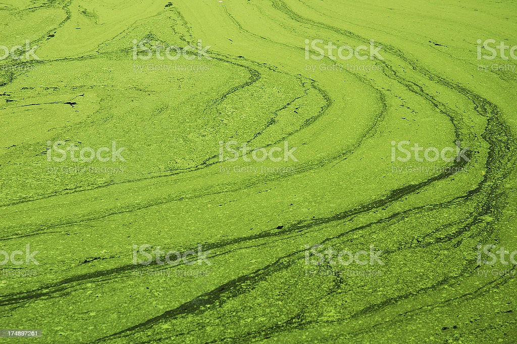 Eutrophic Green Pond stock photo