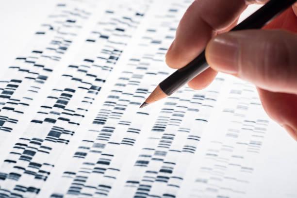 auswertung von adn-gel - investigación genética fotografías e imágenes de stock