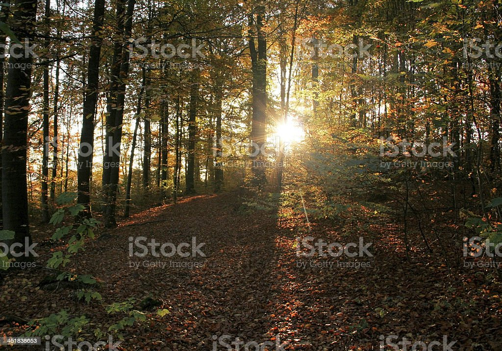 evening at autumn forest stock photo