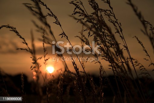 519188550 istock photo Evening atmosphere with long high grasses. The Suns goes down 1156999305