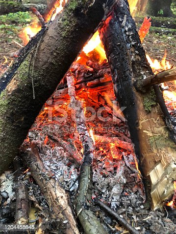 Evening beautiful bonfire of burning pine in the wild forest. Firewood burns orange flame. Red flame over hot coals of fireplace. Power of fire. Magic fire. Closeup