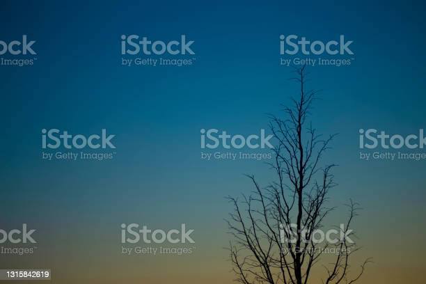Photo of Evening dark blue sky at sunset with a lonely tree silhouette. Art photography for poster and cover concept