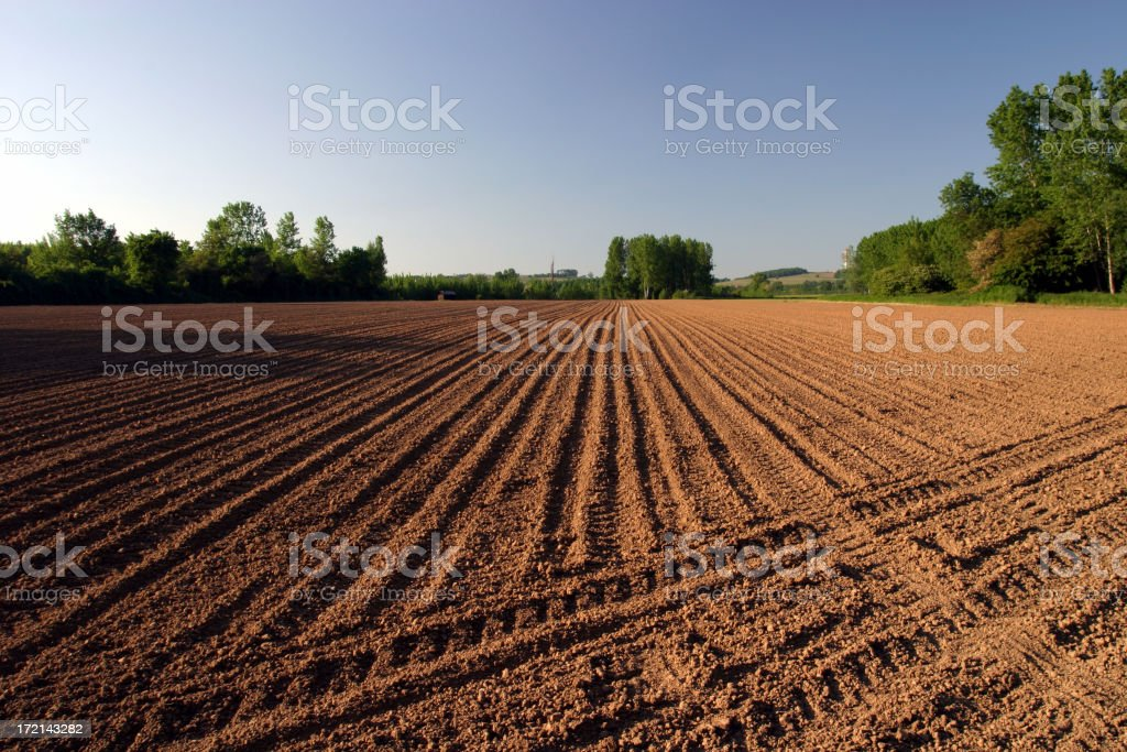 Evening field royalty-free stock photo