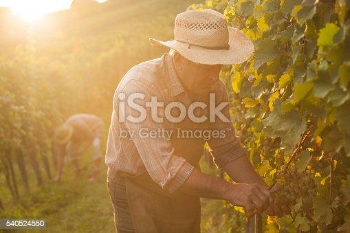 istock Evening harvest 540524550