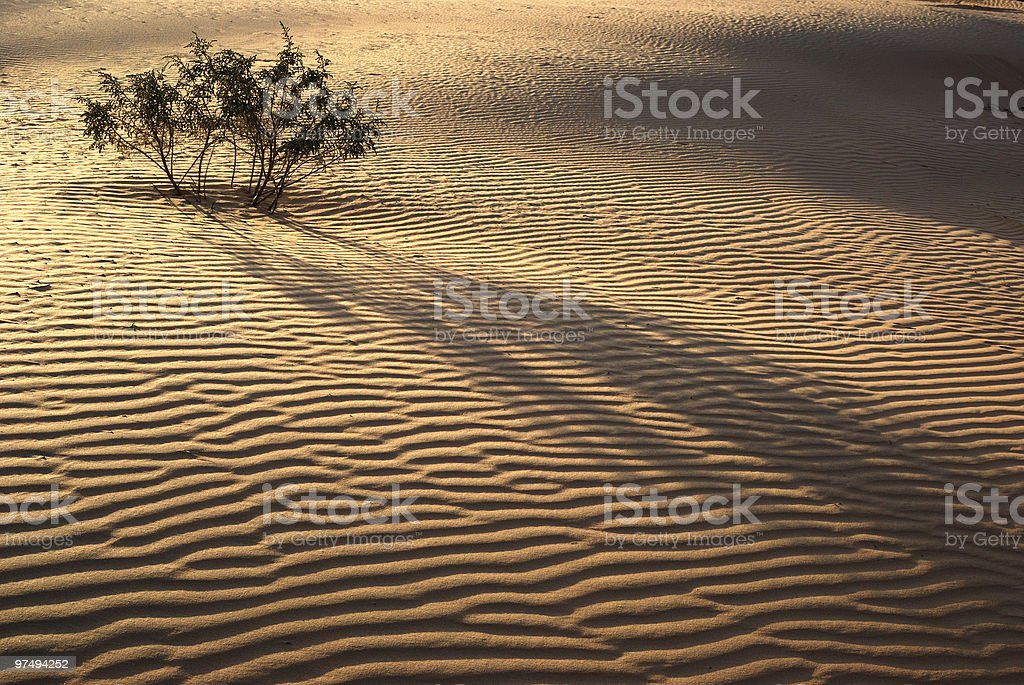 Evening in desert royalty-free stock photo