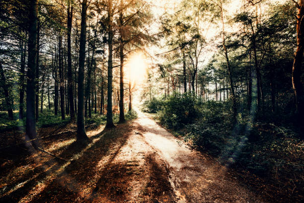 Abend im Wald – Foto