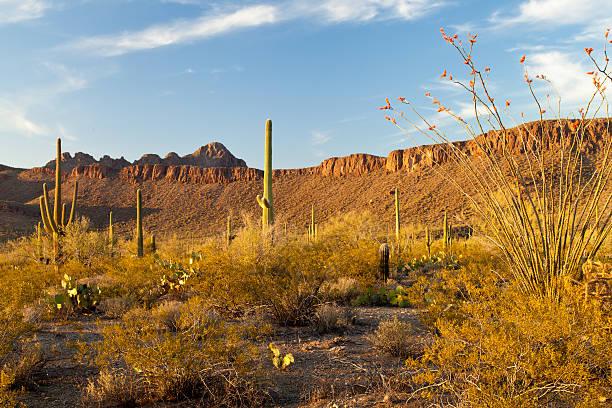 Evening light in Saguaro National Park stock photo
