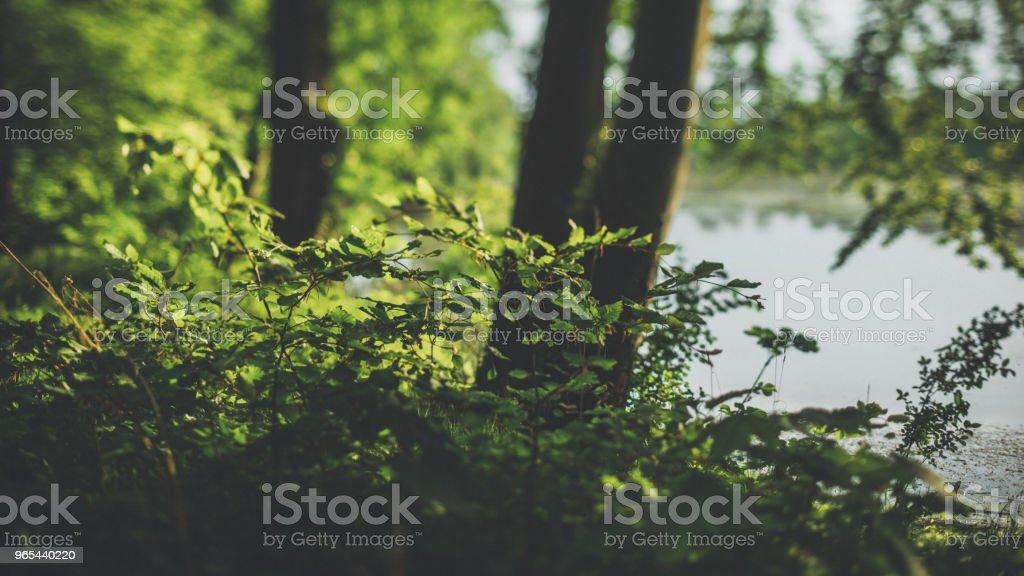 Abendlicht im Wald am Wasser - Lizenzfrei Abenddämmerung Stock-Foto