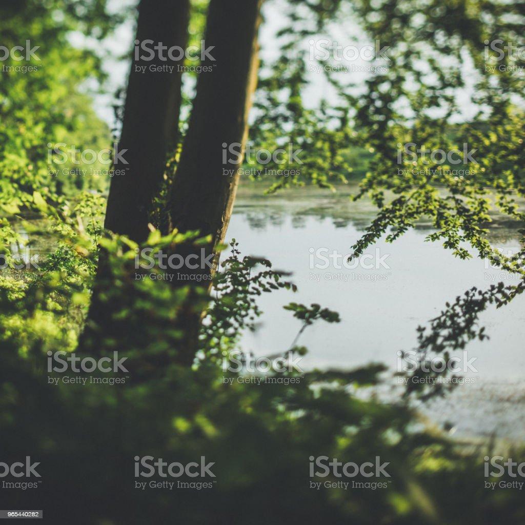 Lumière du soir dans la forêt par l'eau - Photo de Allemagne libre de droits